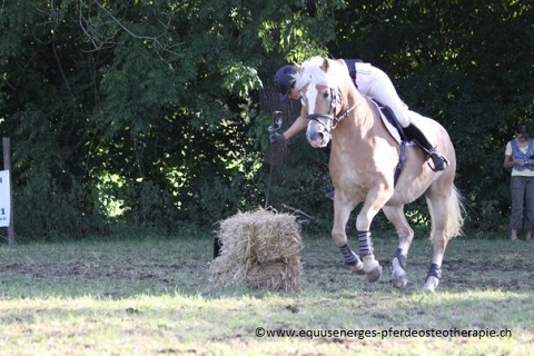 Gleichgewicht des Reiters