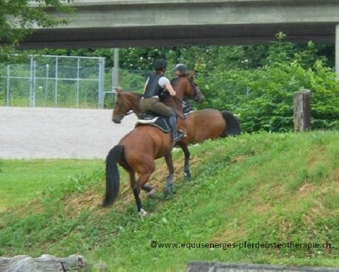 Hinterhand Training Pferd