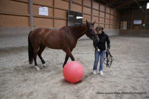 Pferd spielt Fussball mit einem Gymnastikball
