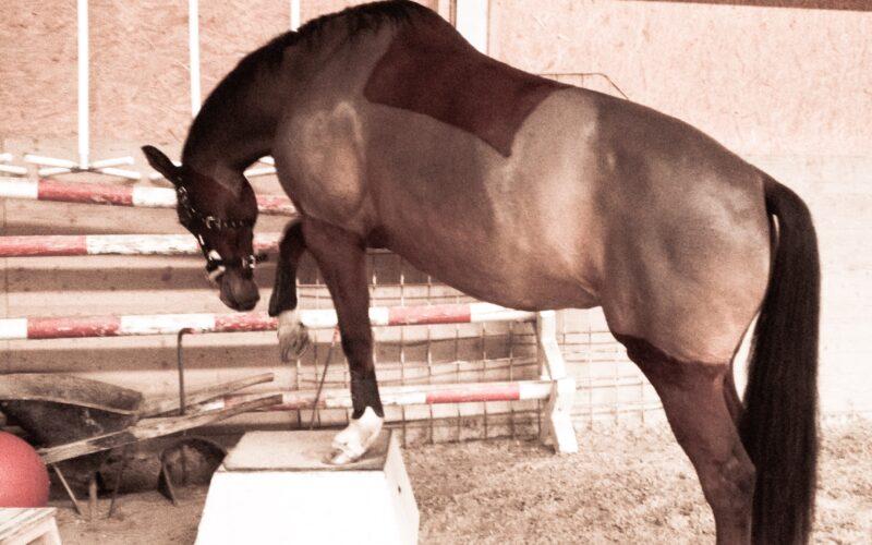 Pferd auf einem Podest