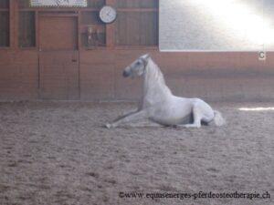 Pferd frei in der Halle-ein Tag Pause